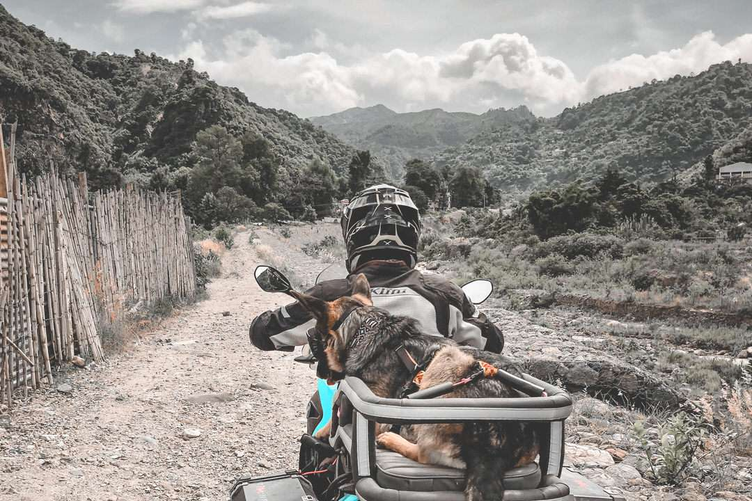 Man and German Shepherd ride dirt road with motorcycle dog carrier
