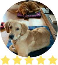 One Golden Retrievers lays on a blue outdoor dog bed and the other lays on a pink bed