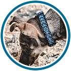 Dog wears blue collar in blue circle