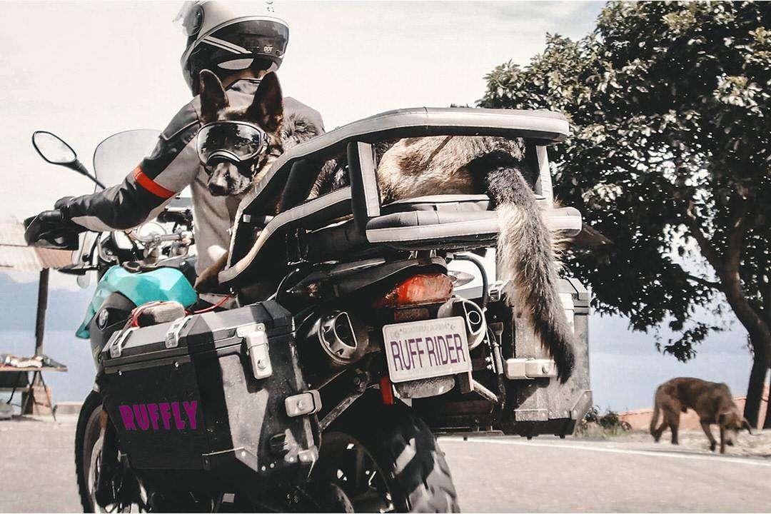 German Shepherd rides on BMW adventure motorcycle in sleek black upholstered dog carrier